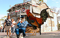 key west chicken