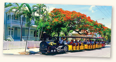 conch tour train with bouganvillea tree in background